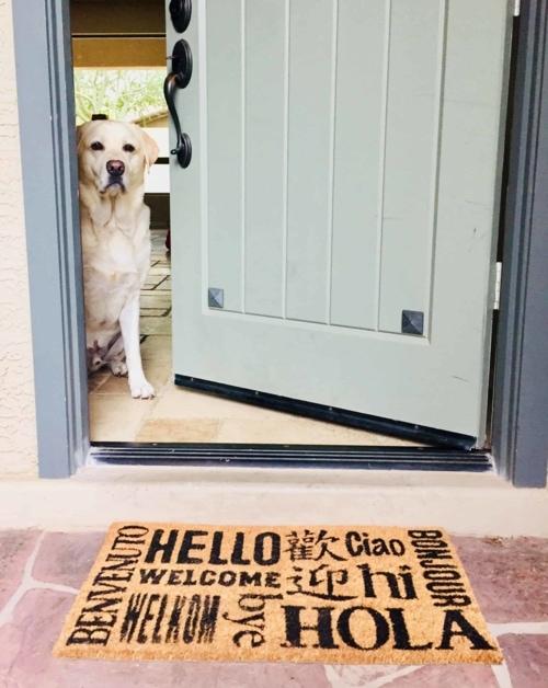 Dog at Front Door on NestTenders Jacksonville Property Management website